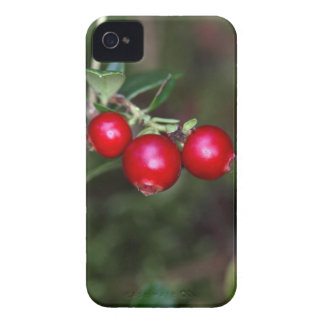 Berries of a wild lingonberry (Vaccinium vitis-ide iPhone 4 Cover