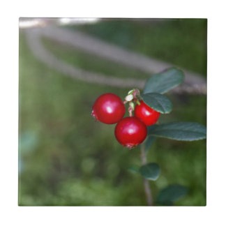 Berries of a wild lingonberry (Vaccinium vitis-ide Tile