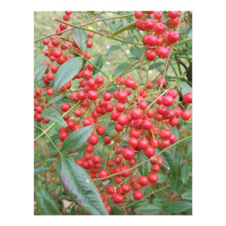 Berries on Nandina 21.5 Cm X 28 Cm Flyer