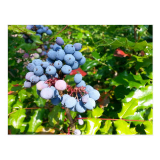 Berries Postcard