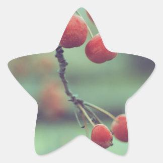 Berries Star Sticker