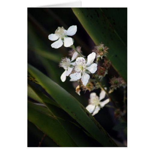 Berry Bloom Greeting Card