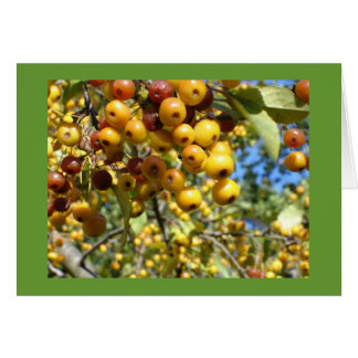 berry delight greeting card