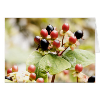 Berry Delightful | Autumn Berries Greeting Card