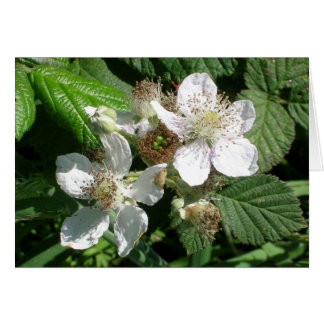 Berry Flowers Greeting Card