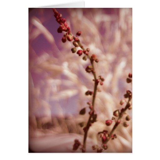 Berry Greeting Card 2