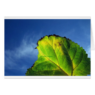 Berry leaf and Autumn colors. Card