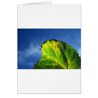 Berry leaf and Autumn colors. Cards