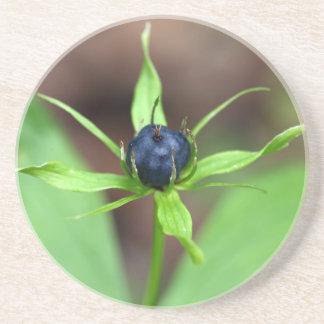 Berry of an herb paris (Paris quadrifolia) Beverage Coasters
