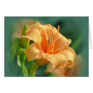 Bertie Blooms - Daylily Card