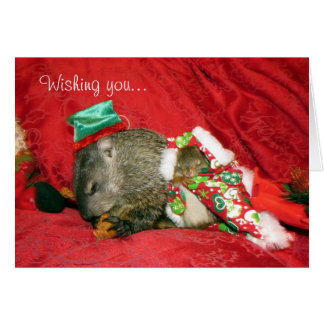 Bessie and Bluster Holiday Card