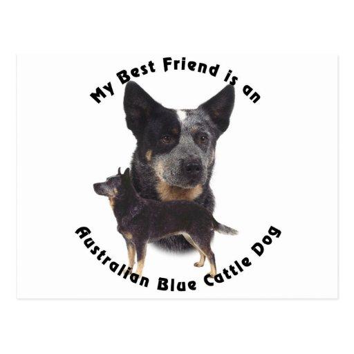 Best Friend Australian Blue cattle Dog Postcard