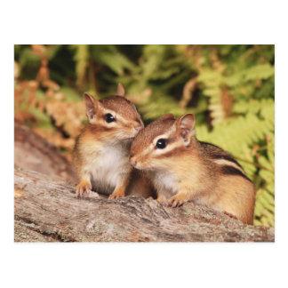 Best Friends Baby Chipmunks Postcard