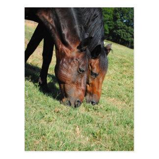 Best Friends-Horse Photo Post Card
