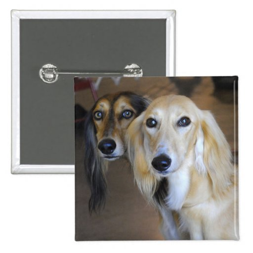 Best Friends- Saluki Dogs Button