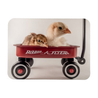 Best Friends Together Cute Chicks in Red Wagon Flexible Magnet