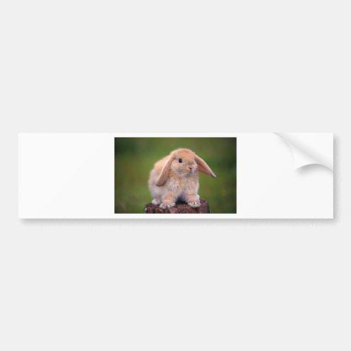 Best Long-Eared Bunny Buddy Bumper Stickers