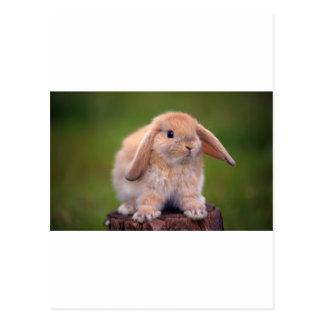 Best Long-Eared Bunny Buddy Postcard