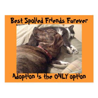 Best Spolied Friends Postcard