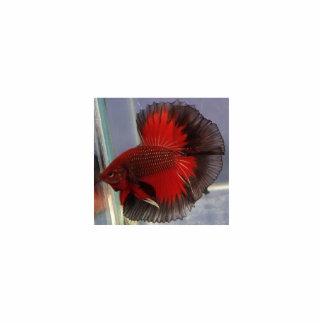 Betta Fish Sculpture Photo Cut Outs