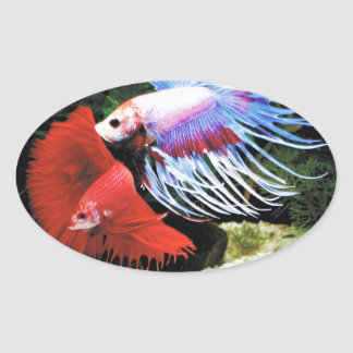 Betta Oval Sticker