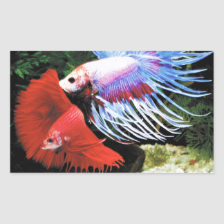 Betta Rectangular Sticker