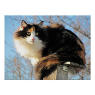 Better View Calico Cat Photo Posters