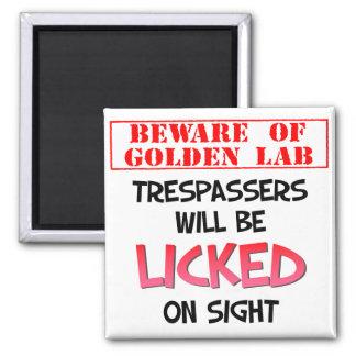 Beware of Licking Golden Lab (White) Magnet