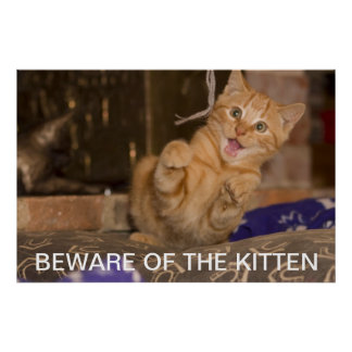 Beware of the Kitten Poster