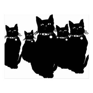 Beware the Black Cat Postcard
