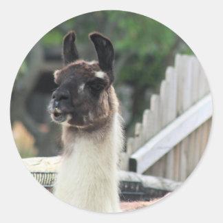 Beware the llama! classic round sticker