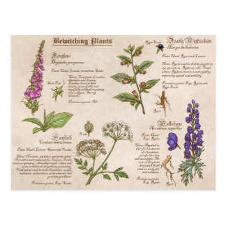Bewitching Plants Feild Guide Postcard