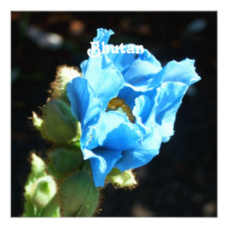 Bhutan Blue Poppy Personalized Invitations