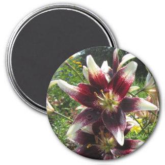 Bi-Color Burgundy Creme Asiatic Lilies Magnet
