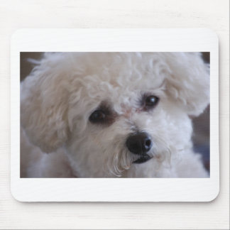 Bichon close up mouse pad