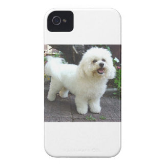 Bichon Frisé Dog iPhone 4 Cover