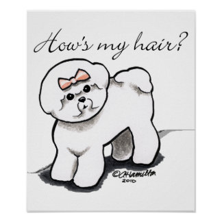 Bichon Frise Hows My Hair Posters