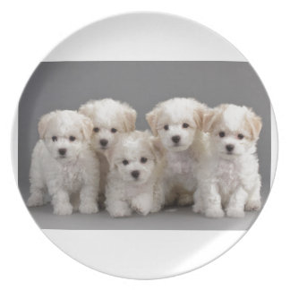 Bichon Frisé Puppies Plate