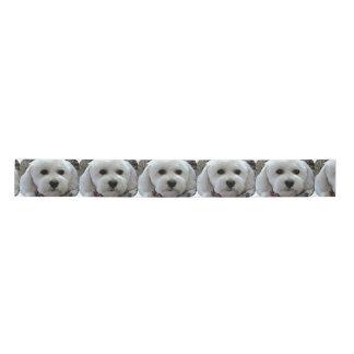 bichon poodle satin ribbon