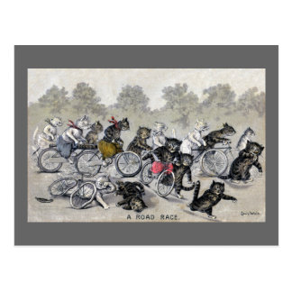 Bicycle Riding Cats Postcard