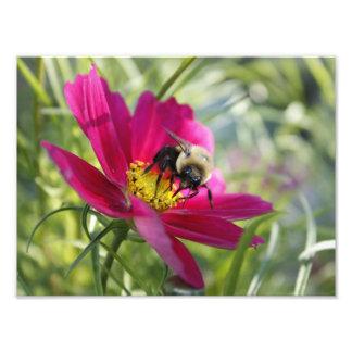 Big Bee Eyes Photograph