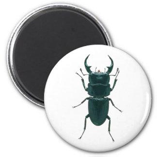 Big Black Dung Beetle 6 Cm Round Magnet