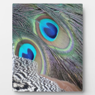 Big Blue Eyes Of A Peacock Feather Display Plaques