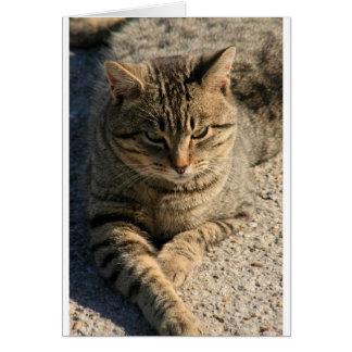 Big Boy Tabby Tom Cat Card