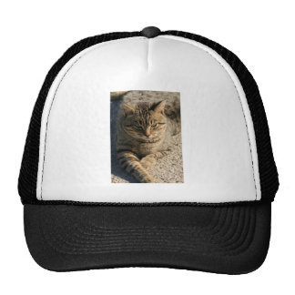 Big Boy Tabby Tom Cat Trucker Hat
