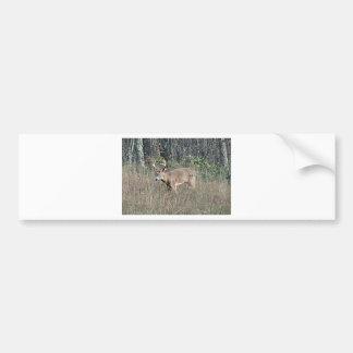 Big buck by james potvin bumper sticker