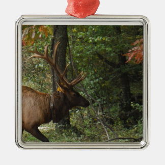 Big Bull Elk with Large Antler Silver-Colored Square Decoration