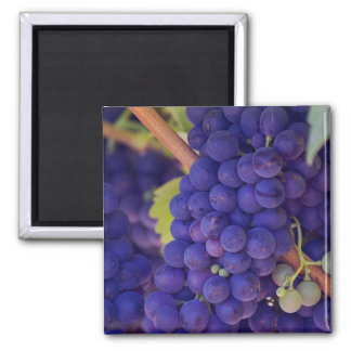 Big Bunch of Juicy Purple Grapes 2 Inch Square Magnet