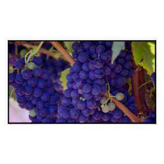 Big Bunch of Juicy Purple Grapes Poster