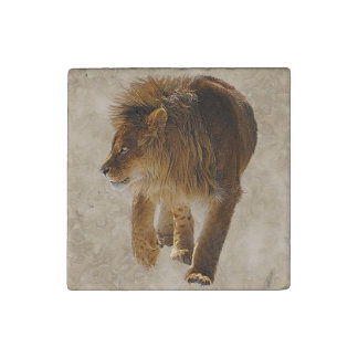 Big Cat African Marozi Lion Wildlife Photo Design Stone Magnet